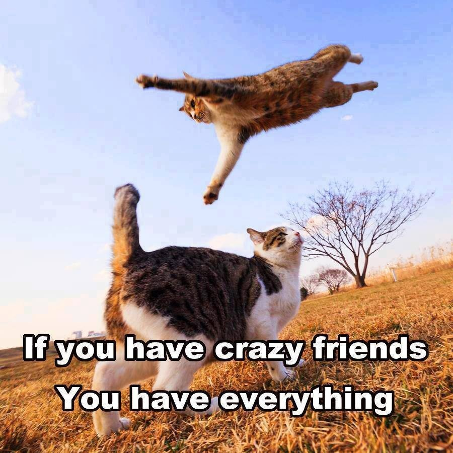 Dragon Play - Page 2 Funny-cats-crazy-friends-cats-1502742827